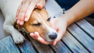 Corona: Müssen unsere infizierten Haustiere künftig eingeschläfert werden?