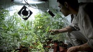 """""""Menschen belogen"""": Repräsentantenhaus pro Marihuana-Legalisierung"""