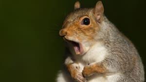 Betrunkenes Eichhörnchen wird zum Internetstar (VIDEO)