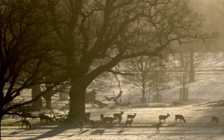 In Pictures: Below-zero temperatures create a frosty morning