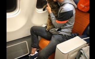 重量オーバーの飼い猫を不正に機内に持ち込んだ男性、後にバレてマイルをはく奪される