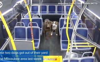 バスの運転手が、深夜にさまよう迷子の犬2匹を拾って保護