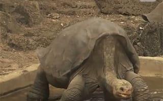 800匹を超える子孫を残し、種を絶滅から救ったゾウガメの「ディエゴ」