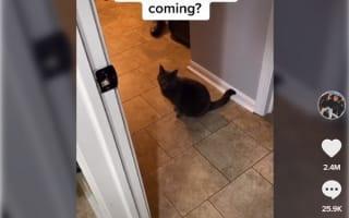英語を喋ったと話題の猫動画がこちら【映像】