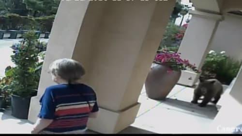 【動画】子グマが高級住宅街に出没! 老夫婦の予想外の反応とは?