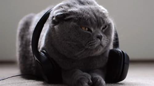 「猫のための音楽を作りたい!」→2000万円以上も出資が集まったwww【動画】
