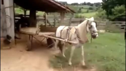 ロシアで車庫入れが上手すぎる馬が話題に