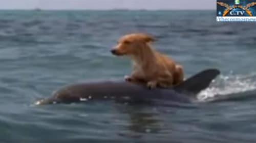 海で溺れていたワンコを助けたイルカが話題に 「賢すぎる」「救世主」【動画】