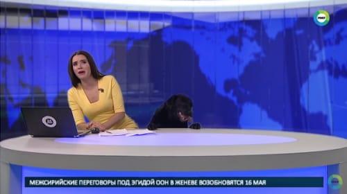ロシアのニュース番組の生放送中に犬が乱入するハプニング!【映像】