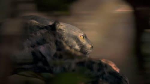 英BBCが作ったリオ・オリンピックの予告映像が斜め上過ぎてカッコいい!選手を野生動物で表現
