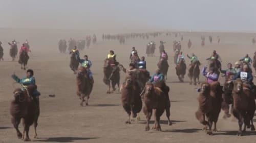 見渡す限りラクダだらけ!1108頭ものラクダが参加したレースがギネスレコードに【動画】
