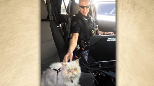 米警察が、エイプリルフールのネタに「警備猫部隊」新設を発表
