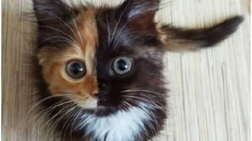 ネットで話題の「2つの顔を持つ」猫が可愛過ぎる!