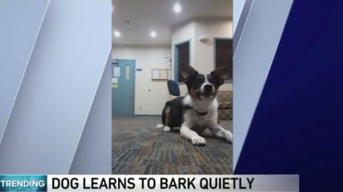 ささやき声を習得した犬が話題に【映像】