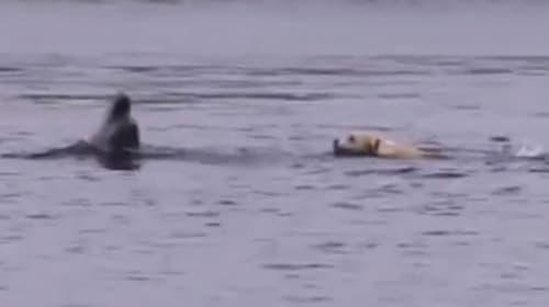 イルカとワンコの微笑ましすぎる交流が話題に