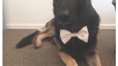 怖がられやすい愛犬をフレンドリーに見せるために飼い主が思い付いた方法とは?