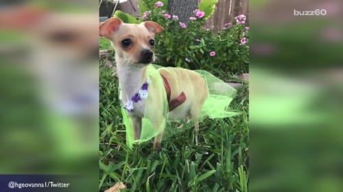 ビヨンセのマタニティ写真を真似する犬が「かわいい!」と話題に