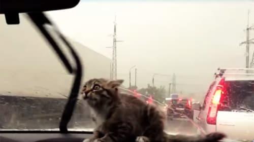 猫VSワイパー!動くワイパーに果敢に立ち向かうニャンコが可愛すぎる【動画】