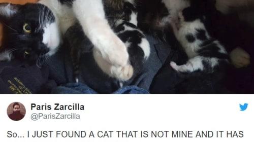 ベッドの下に潜む猫の一家を発見!メロメロになった家主のツイートが大きな話題に