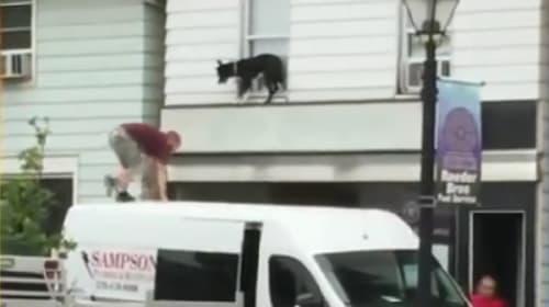 降りれないワン! 2階の窓枠で身動きがとれない犬を通りすがりの人たちが無事救出【動画】
