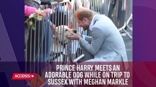 英ヘンリー王子とメーガン妃、サセックス初訪問で犬との触れ合いを楽しむ姿が話題に