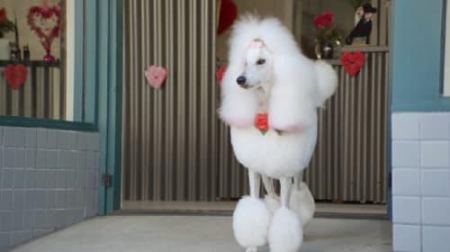 犬のトリマーがオススメする今年のバレンタインの過ごし方