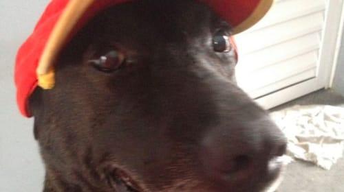ガソリンスタンドに捨てられていた犬がカワイイ従業員に変身!