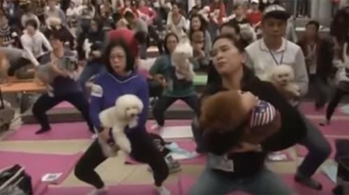 犬と一緒にヨガ...だと? 270人&270匹が参加する「ドッグヨガ」がカオス状態www【動画】