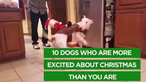 可愛い過ぎる!クリスマスに大興奮のワンコたち【映像】