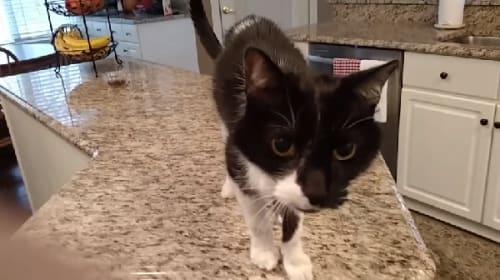 鳴き声が渋過ぎると話題のネコ【映像】