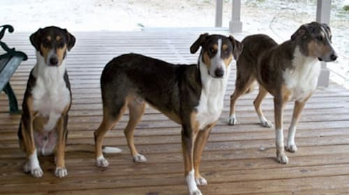1000万円以上かけて愛犬のクローンを誕生させた獣医師が話題に【動画】