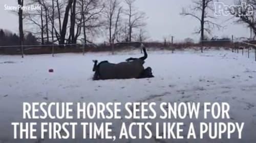 保護された馬が初めての雪に大はしゃぎ【映像】
