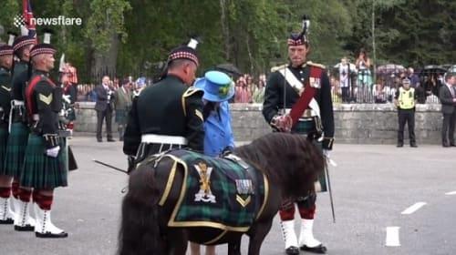 英エリザベス女王、ロイヤル・スコットランド連隊のポニーとの「因縁」再び