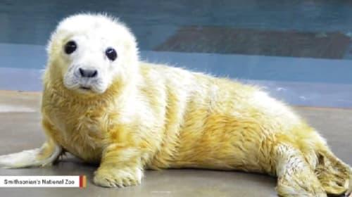 米国の動物園で生まれたばかりのアザラシの赤ちゃんがとってもキュート!
