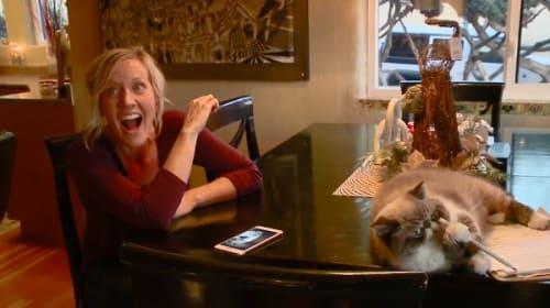 テレビのインタビューを邪魔するネコが可愛すぎる【動画】