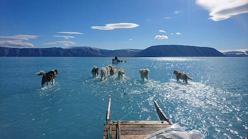 Sled dogs seem to walk on water in climate expert's photo of melting Arctic ice