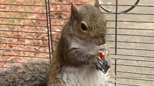 Alabama man fed meth to caged 'attack squirrel'