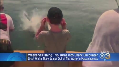 Great white shark jumps up at fishing boat and swats tail at boy