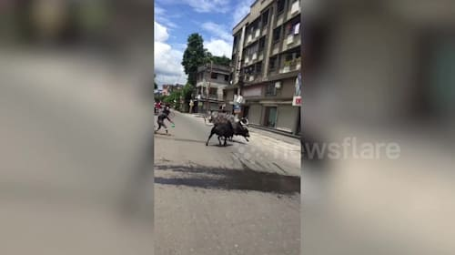 Two bulls crash through shop window during street fight in India, terrifying customers