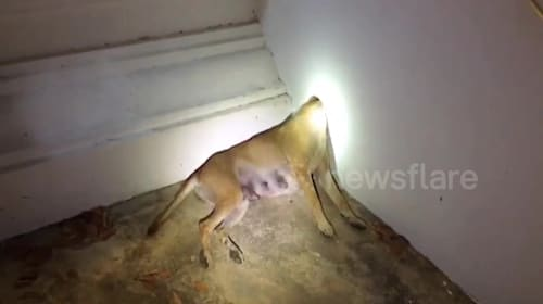 Dog rescued after getting head stuck in concrete