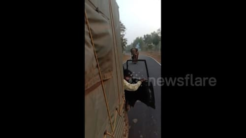 Driver reverses vehicle in panic as raging elephant chases him