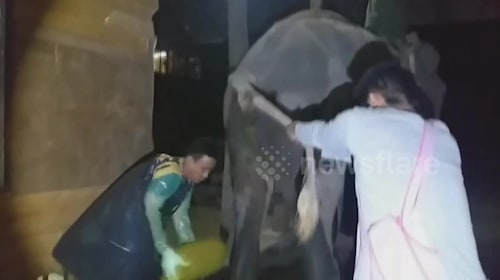 Constipated elephant has 22kg lump of dung pulled from his bottom
