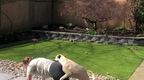 Dog gets overly friendly with woman doing lockdown yoga in back garden