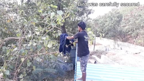 Guy rescues bird entangled in string hanging from tree
