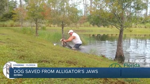 Florida Man Wrestles His Puppy From Alligator's Jaws In Stunning Video