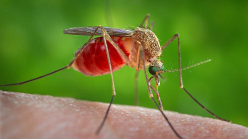 Tourists to Greece warned of deadly West Nile virus