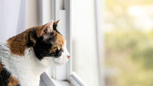 Cat owners urged to keep pets indoors to stop spread of coronavirus