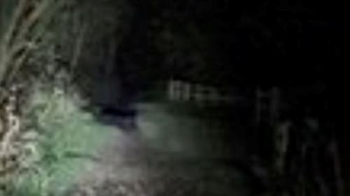 Dog walker captures incredible footage of big cat sighting in the Welsh countryside