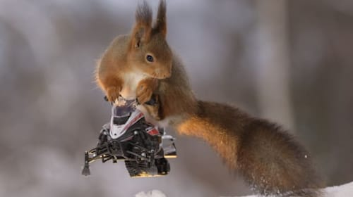 Hilarious photos show squirrels posing on miniature wooden skis and snowmobiles