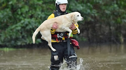 Dogs and their owners rescued from flooding in Wales